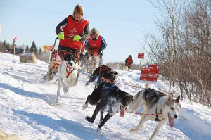 Dog sled races by Angela Hay