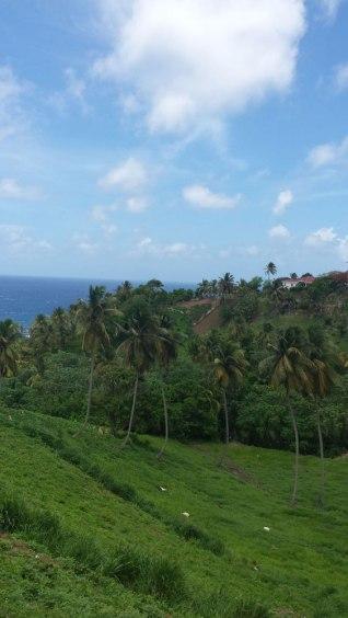Highway view