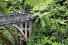 The bridge to nowhere over the Mangapurua Stream in Whanganui National Park.