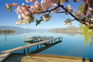 Spring blossoms and a view of a dock on Okanagan Lake.