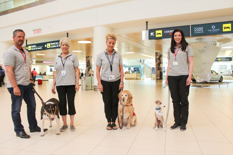 Meet some of the therapy dogs that you may see wandering around the airport: Bosco (left), Lola (centre) and Sarge (right).