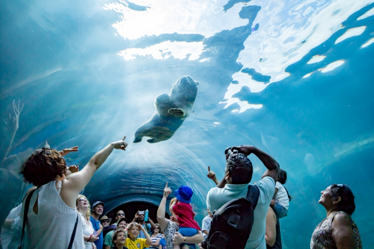 Journey to Churchill features an awesome underwater gallery where you can watch polar bears and seals.