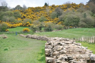 Remnants of Hadrian's Wall which spans England from sea to sea, a distance of 117.5 km.