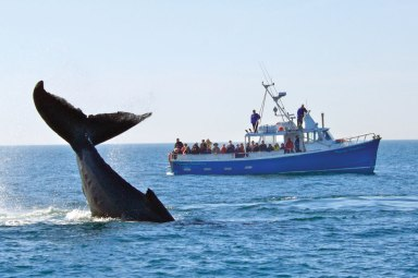 Whale watching in the Bay of Fundy.