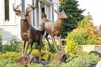 Buck and Doe by Peter Sawatzky.